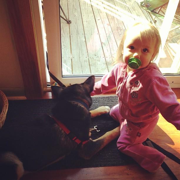 "Gwen is training Atticus this morning. She says ""Da... Da... Da... Ga bah!"" (Down... Down... Down... Good boy!) and then gives him a kibble. The cute, it is maddening!"