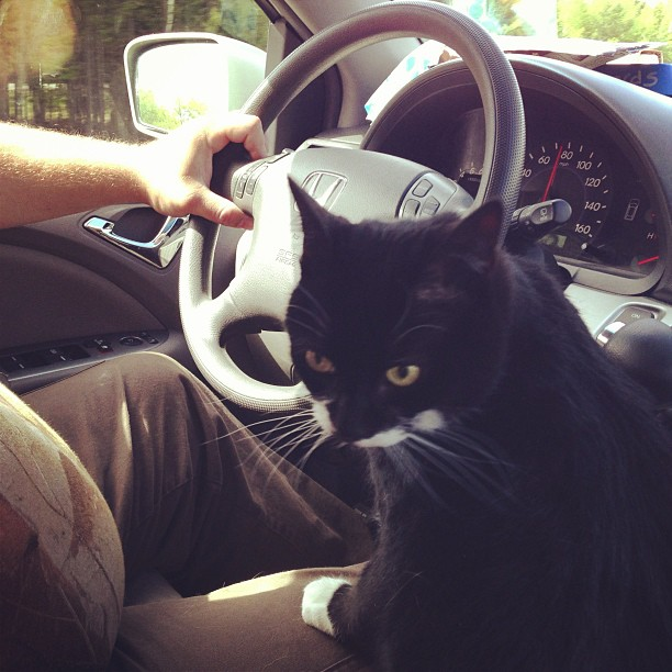 Typical backseat driver.