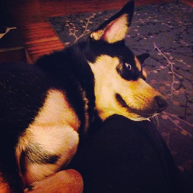 Doggie foot warmer