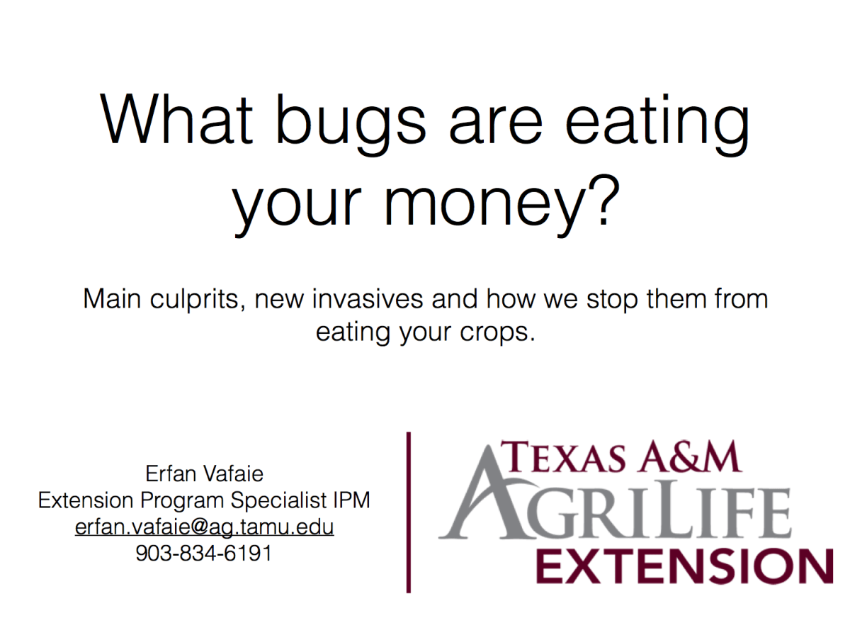 What bugs are eating your money?  Main culprits, new invasives and how we can stop them from eating your crops
