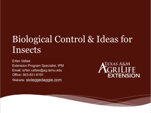 Biological Control & Ideas for Insects