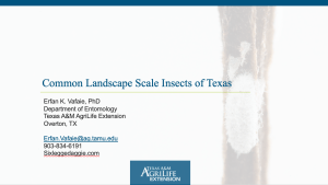 Common landscape scale insects of Texas