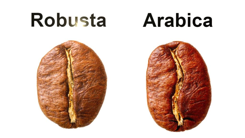 Robusta and Arabica