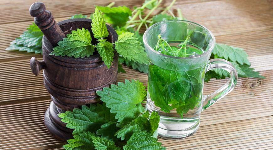 Nettle tea infusion