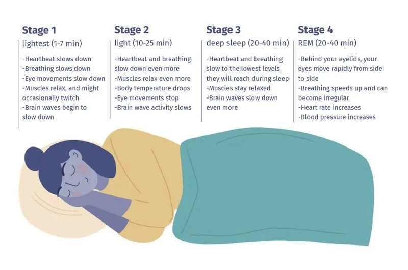 Best sleep cycle stages