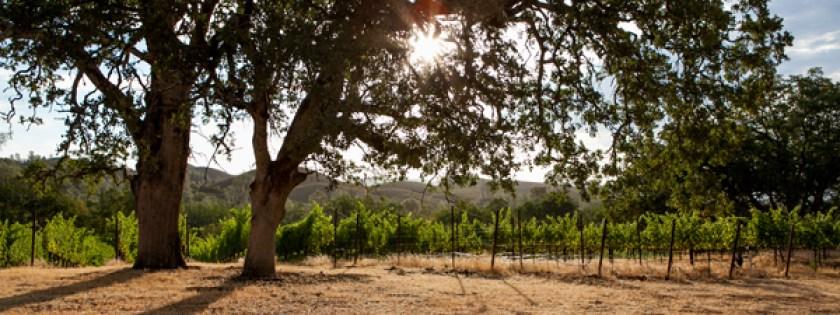 Michaels vineyard, Six Sigma Ranch