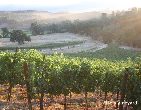 img_6467-sunrise-in-elses-vineyard-else-size-copy