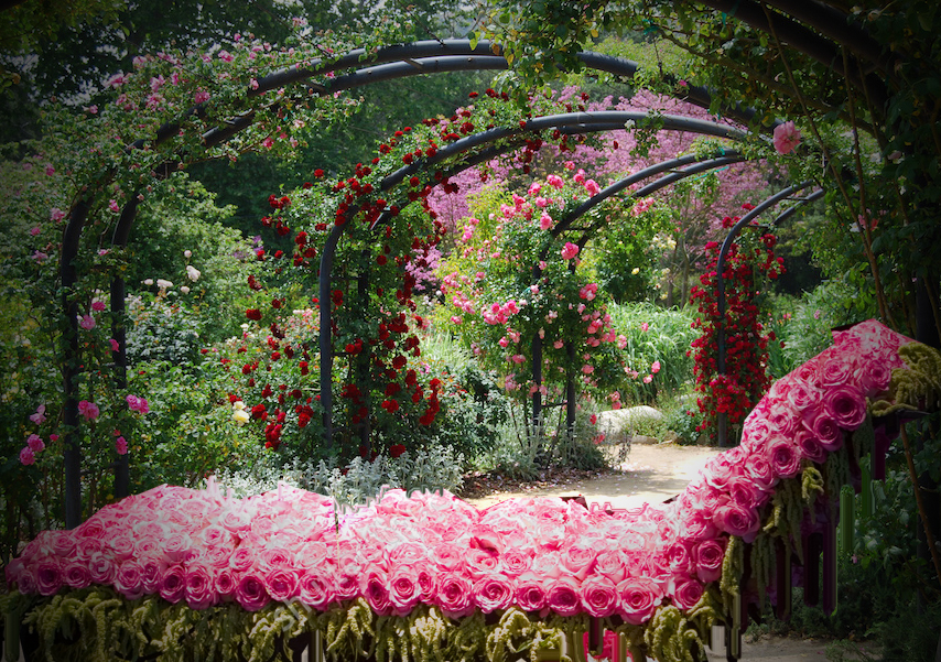 bed-of-roses