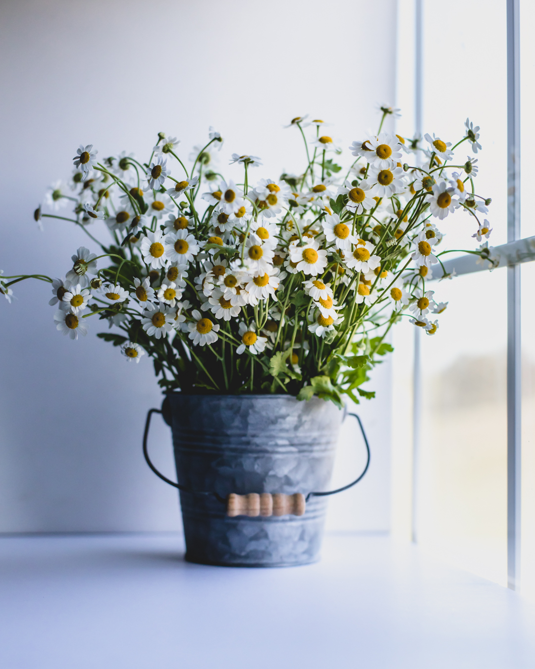 Bucket of Daisies-1
