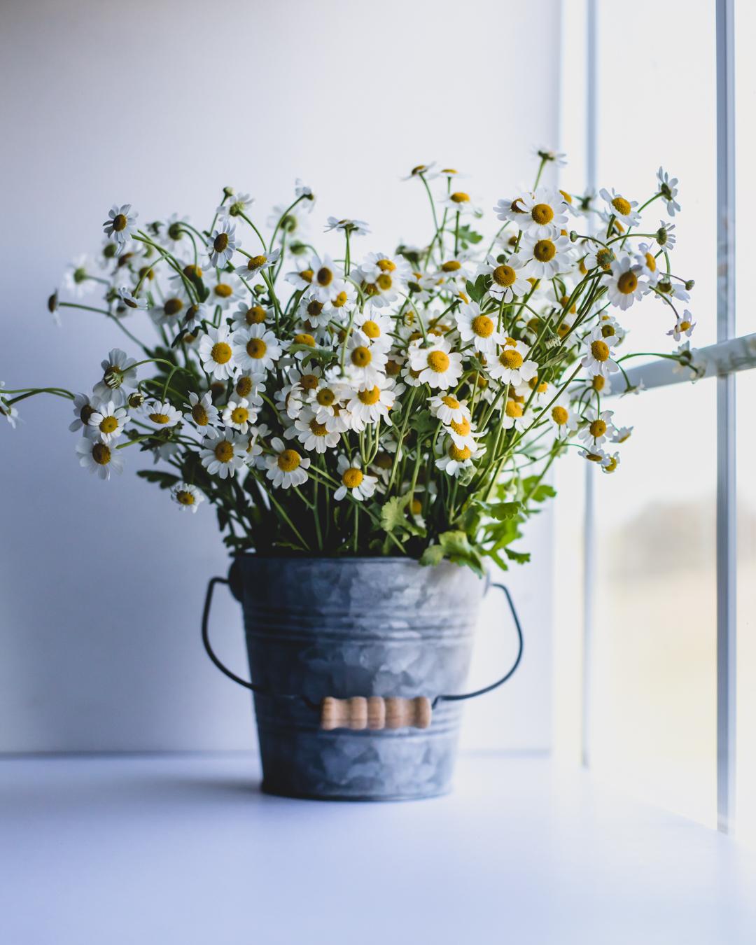 Bucket of Daisies-1