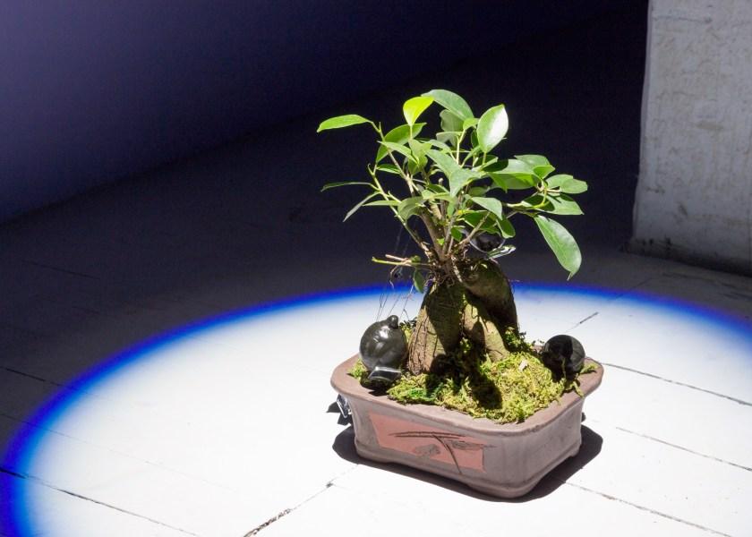 Max Guy, Nephilim Modulation Systems, 2017. Ginseng Ficus bonsai, acrylic mirror, galvanized steel, cotton thread, soil, plaster, sepia ink, encaustic wax. Photo credit: Jack Schneider.