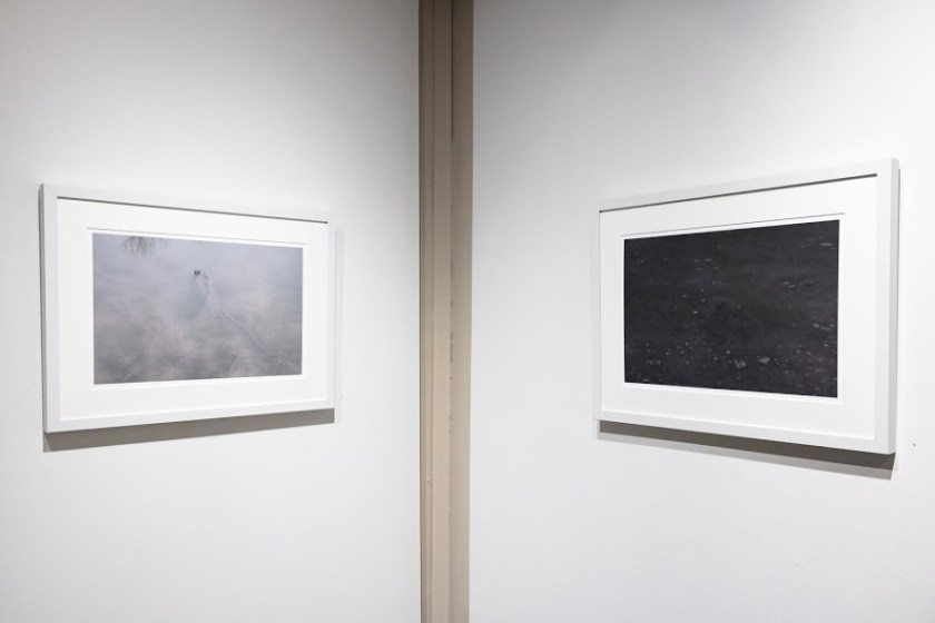 Nancy Fewkes, Site A, Spring Lake, 2.17 and Site A, Spring Lake, 12.16, archival digital ink jet print. Image courtesy of Lucas Stiegman.