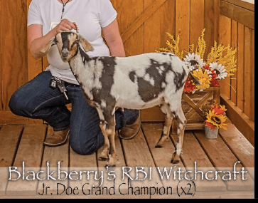 Wicca, Junior Grand Champion x2