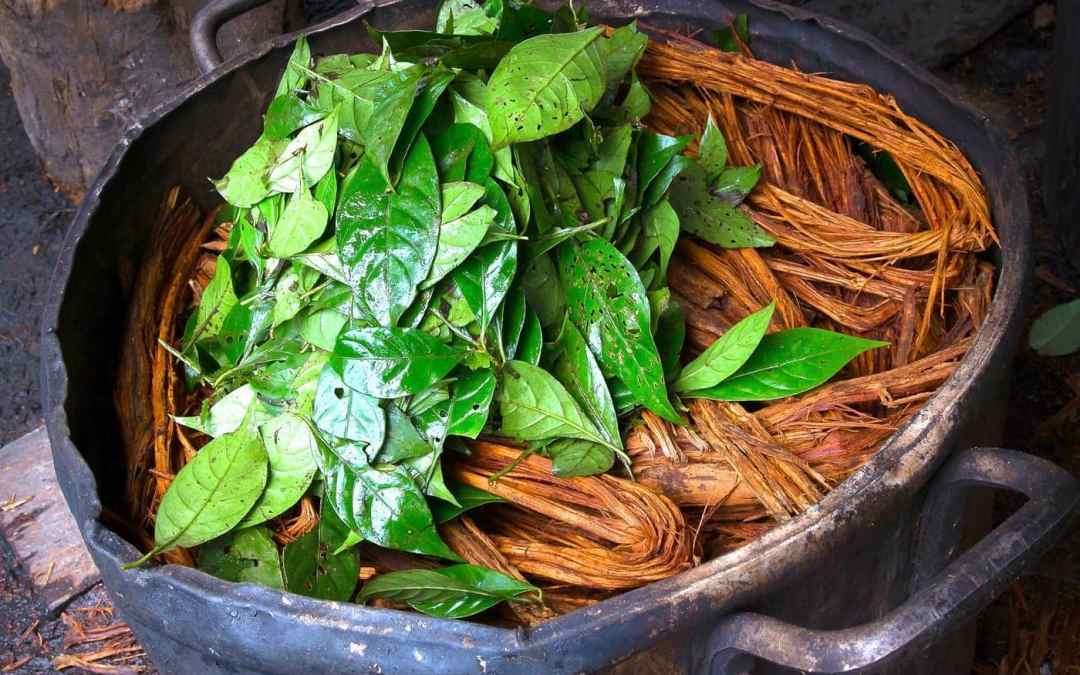ayahuasca brouwsel