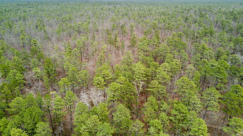 New Jersey Pine Barrens Photo