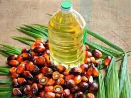 Palm Oil 1