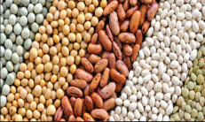 agro-products grains 2