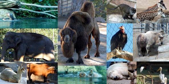 San Diego Zoo Collage 1 by SJF Communications