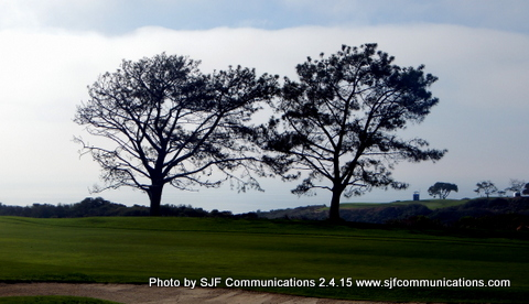 Torrey Pines Fog and Trees; Photo by Susan Farese, SJF Communications