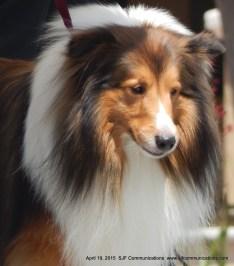 dog62