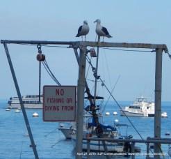 Gulls overlooking the harbor