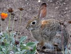 Bunny at Balboa Park, Photos by SJF Communications