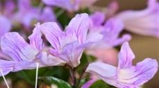 flowers.IMG_1600