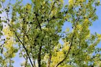tree.IMG_5822