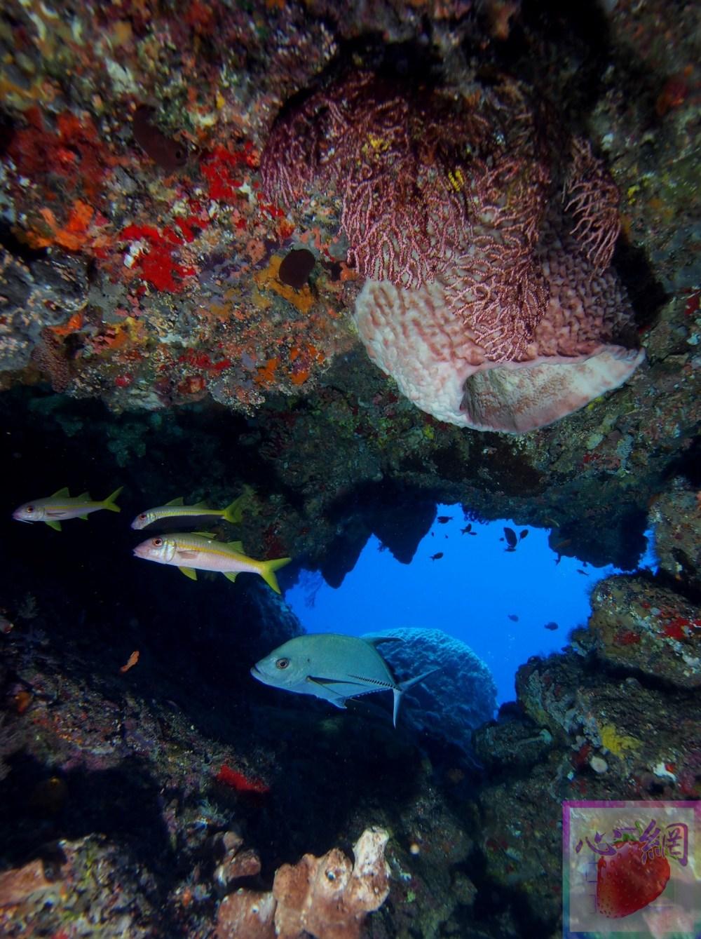 【看見綠島 水下生態之美映入眼簾 國際潛水攝影師揭開神秘面紗】 – 東岸微觀