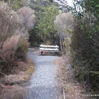 Ridge Track, Whakapapa Village