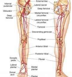 https anatomyclass01 us blood vessels lower limb blood vessels lower limb arteries in the lower leg human anatomy lesson [ 865 x 1024 Pixel ]