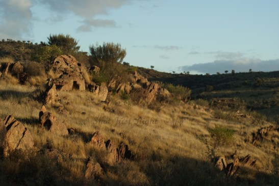 scenery near Sculpture Hill At Broken Hill