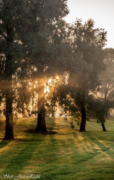 Sun's ray through the trees