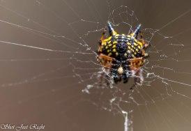 Interesting Spider
