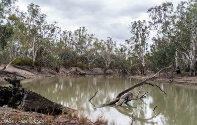 Wakool River, NSW