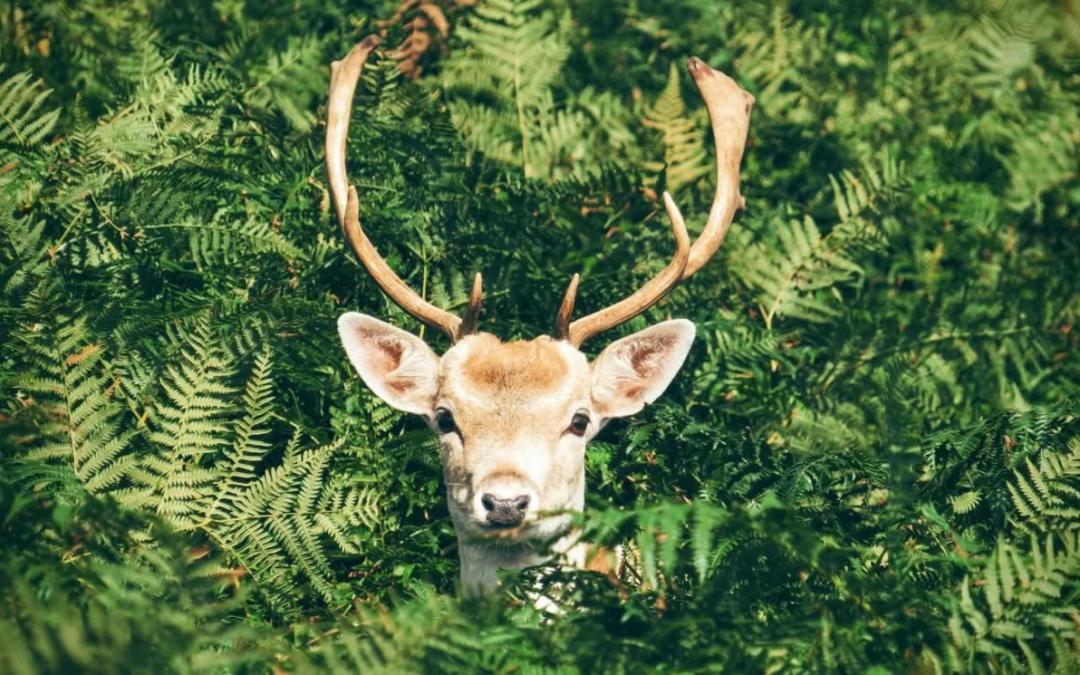 Tired of Deer Eating Your Shrubs?