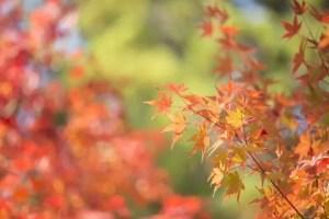箱根の紅葉2016の見ごろ時期と穴場スポットはココ!