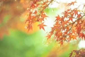 鬼怒川・塩原の紅葉2018の見ごろの時期と紅葉スポットはココ!