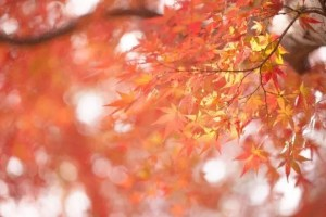 清水寺の紅葉2017ライトアップや見ごろ時期と観光スポットはココ!