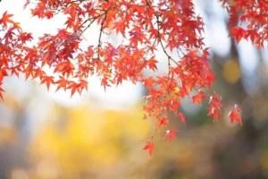 永観堂の紅葉2016のライトアップと見頃や東山の紅葉名所はココ!