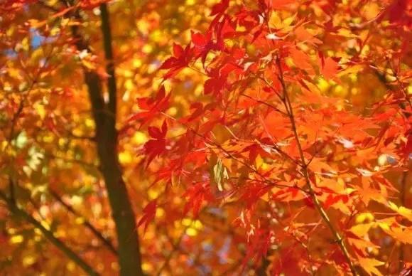 神護寺の紅葉2016の見ごろ時期とライトアップはいつ?