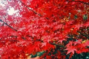 常寂光寺の紅葉2017の見ごろ時期とおすすめ紅葉スポットはココ!