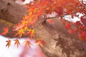 軽井沢の紅葉2017見ごろ時期と紅葉スポットはココ!
