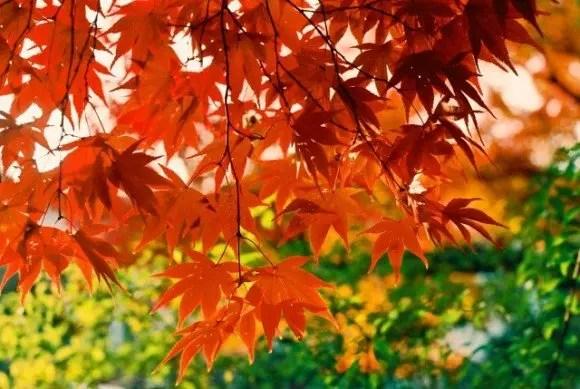 京都勝林院の紅葉2018見ごろ時期と紅葉スポットはココ!
