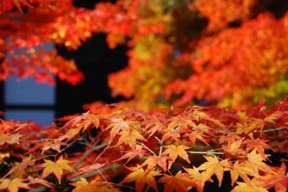 圓光寺の紅葉2016見ごろ時期とおすすめの紅葉スポットはココ!