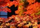 圓光寺の紅葉2018見ごろ時期とおすすめの紅葉スポットはココ!