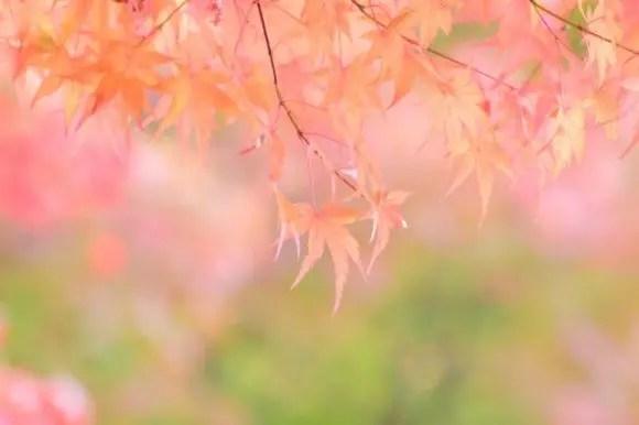 嵐山の紅葉2018見ごろの時期とライトアップや紅葉スポットはココ!