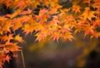 北野天満宮の紅葉2018見ごろ時期とライトアップは?
