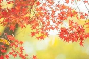 二尊院の紅葉2017の見ごろ時期と紅葉狩りスポットはココ!