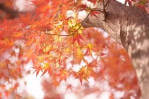 南禅寺の紅葉2016見ごろ時期と紅葉狩りスポットはココ!